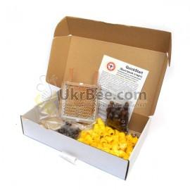 Jenter's honeycomb (Product Set No. 021), Bild