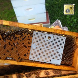 Nicot Queen cage for the Queen Bees settlement, drawing